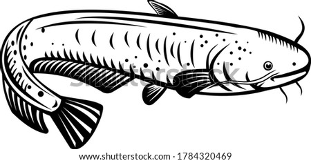 The Giant Lake Biwa Catfish Silurus Biwaensis Biwako-Onamazu Retro Woodcut Black and White Stock photo © patrimonio