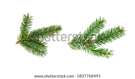 Pijnboom geïsoleerd witte monster poster uitnodiging Stockfoto © Lady-Luck