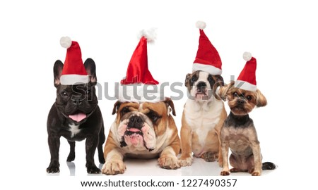 four adorable santa dogs of different breeds sitting and panting stock photo © feedough