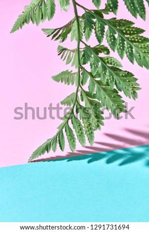 Levél friss páfrány dupla űr szöveg Stock fotó © artjazz