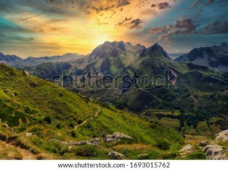 mediterráneo · forestales · panorama · pino · panorámica · vista - foto stock © pedrosala