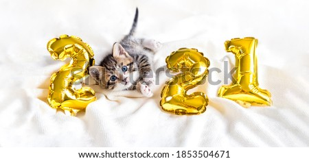 Merry Christmas and Happy New year - funny greeting with heartbeat diagram Stock photo © Zsuskaa