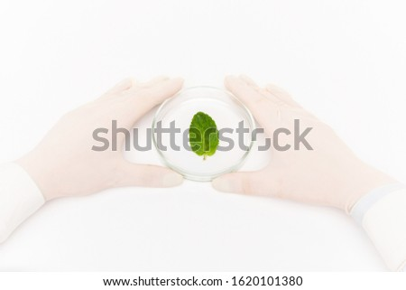 Gloved human hands surrounding petri dish with small green leaf in isolation Stock photo © pressmaster