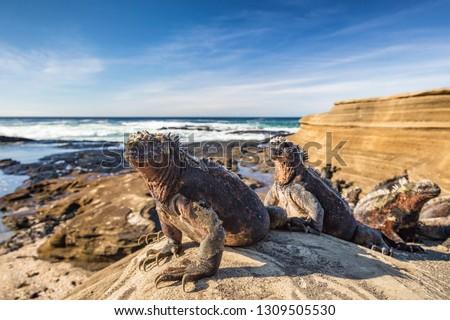 Szigetek tengeri iguana állatok vadvilág nap Stock fotó © Maridav