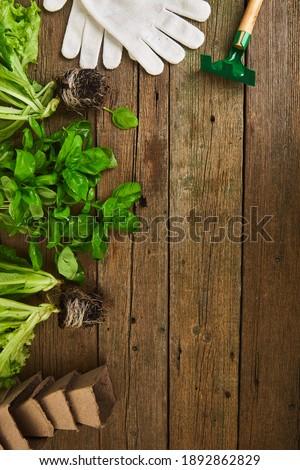 Flat lay of Gardening tools, basil, eco flowerpot, soil on white wooden background. Stock photo © Illia