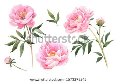 Roze bloemen kunst botanisch luxe Stockfoto © Anneleven