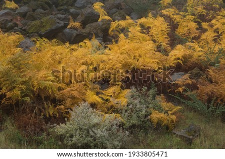 Feto planta canárias sol natureza jardim Foto stock © lunamarina