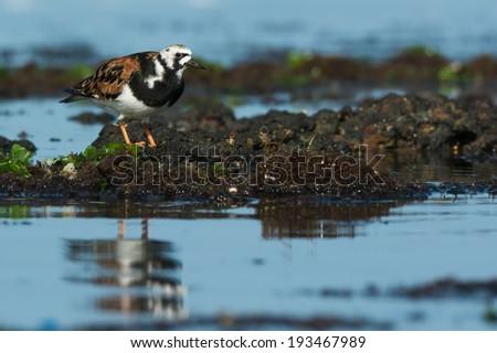 立って 海藻 水 海 アフリカ ストックフォト © davemontreuil