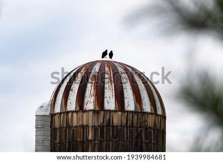 two black vultures on a silo stock photo © njnightsky