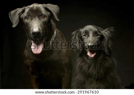 смешанный черный собаки удвоится портрет Сток-фото © vauvau