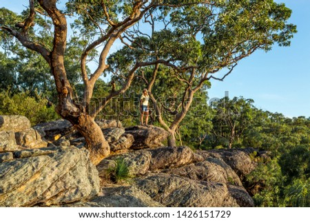 Woman standing under large gum trees on the mountain gully edge Stock photo © lovleah