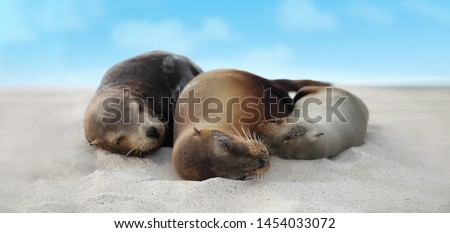 Stock photo: Galapagos Sea Lion pups lying sleeping in sand lying on beach Galapagos Islands