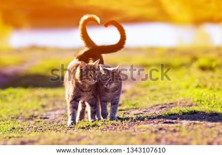 Bonitinho gato casal coração rosa sombra Foto stock © adrian_n