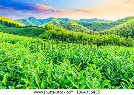Background of a bamboo plantation Stock photo © adrian_n