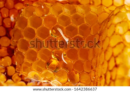 Close up of wooden stick with dripping sweet natural honey on a gray background, traditional useful  Stock photo © artjazz
