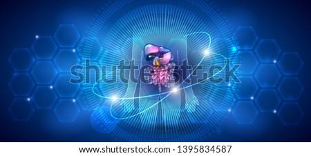 estômago · anatomia · colorido · desenho · abstrato · científico - foto stock © tefi