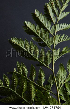 Fern twig presented on a blue background with copy space. Natural background of green plant. Flat la Stock photo © artjazz