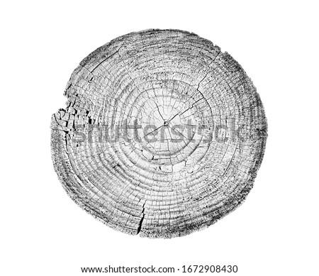 drewna · drewna · tarcica · roślin - zdjęcia stock © boggy