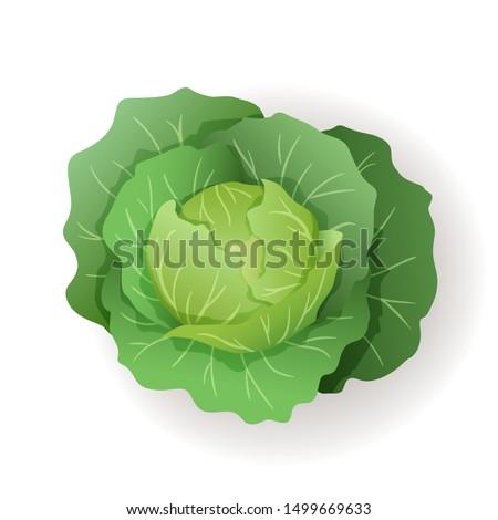 Zöld káposzta nagy levelek ikon izolált Stock fotó © MarySan