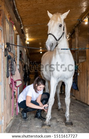 White purebred racehorse standing on wooden floor by barn during grooming process Stock photo © pressmaster