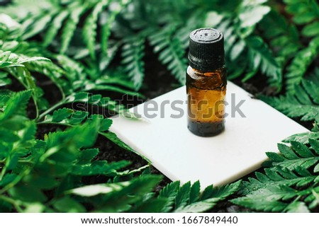 Bottle of herbal essential oil in a green tropical garden, natural scent and organic cosmetics Stock photo © Anneleven