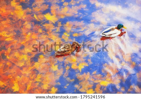 Beautiful red and dark brown foliage on orange background, view from above, flat lay, frame form, te Stock photo © Burchenko