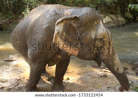 filler · park · Sri · Lanka · bebek · arka · plan · cilt - stok fotoğraf © meinzahn