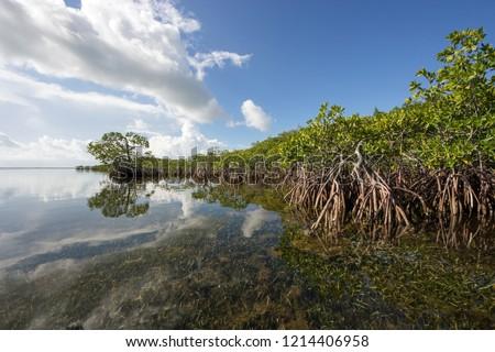 beautiful mangroves in the keys stock photo © meinzahn