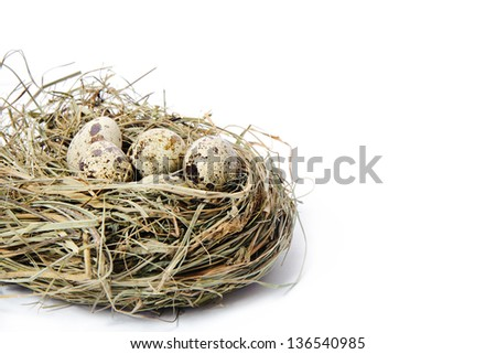 Group of quail spotted eggs in the grassy nest isolated on white Stock photo © tetkoren