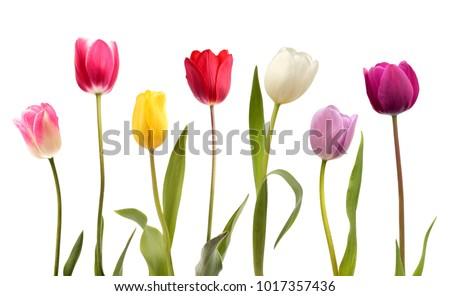 Rose jaune tulipes tulipe Photo stock © davidgn