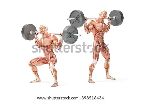 Barbell Squat Exercise. Anatomical 3D illustration. Isolated wit Stock photo © Kirill_M