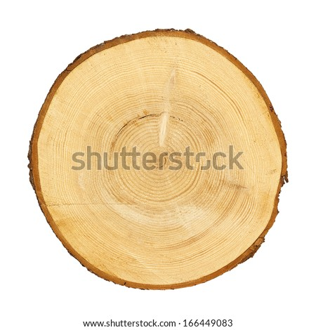 cross section of tree trunk isolated with clipping path on white stock photo © smuki