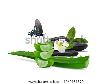 Aloe Vera Herbal and Aloe Vera slice with black rock on wooden white background.Top view and close u Stock photo © Bigbubblebee99