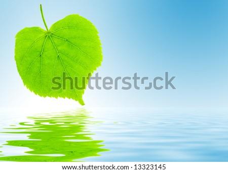 Chaux feuilles vertes miroir bleu ombres copier Photo stock © artjazz