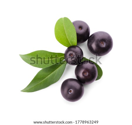 Ripe acai berries and palm leaves. Brazilian superfruit. Euterpe oleracea. Superfood for healthy lif Stock photo © user_10144511