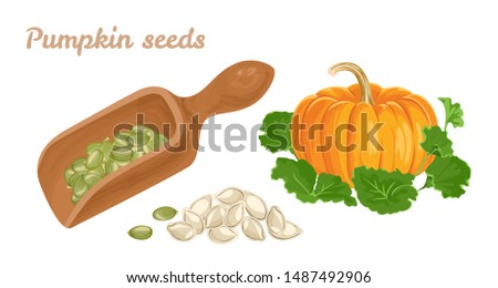 Bunch of pumpkin seeds isolated on white background. Vector cartoon close-up illustration. Stock photo © Lady-Luck