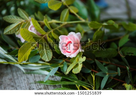 Florist woman is creating fresh rose bouquet on a gray background. Process step by step. Small busin Stock photo © artjazz