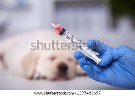 ветеринар · стетоскоп · собака · клинике · медицина - Сток-фото © ilona75