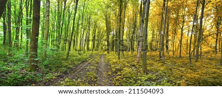 Erdő út ősz átalakulás narancs citromsárga Stock fotó © Melvin07
