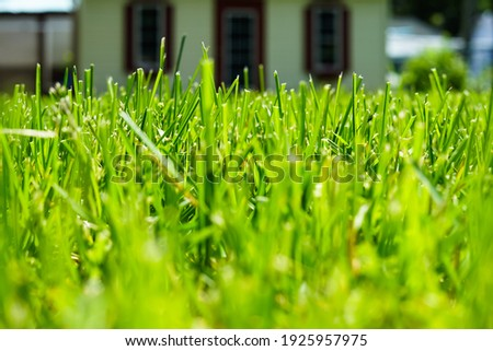 Spring time long lush bright green blades of spring grass background Stock photo © sherjaca