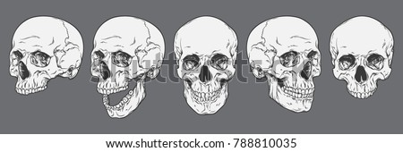 human skull   bone head dead teeth spooky scary pirate isolated stock photo © jeremywhat