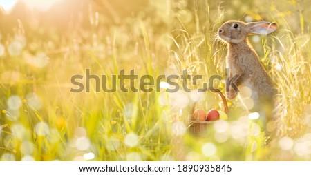 húsvét · nyuszi · tojások · szék · kert · étel - stock fotó © compuinfoto