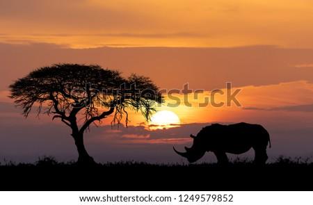 Rhinoceros Africa Zdjęcia stock © Artush