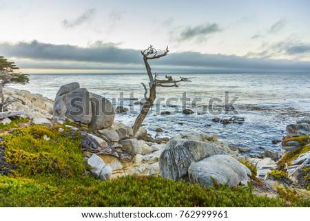 Foto stock: Romântico · nascer · do · sol · ponto · velho · secas · árvores