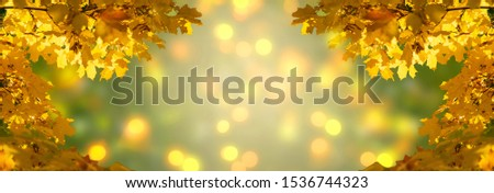 Stock photo: A background decorated with colourful autumn leaves, with copy s