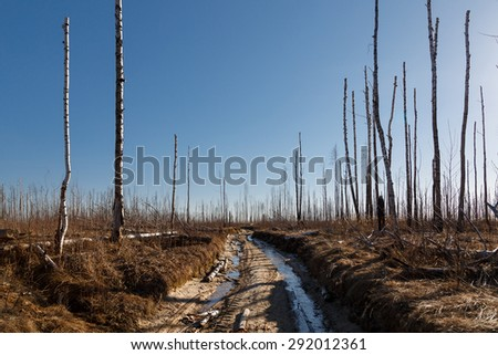 forest with fire damaged trees with black bark in the yosemite n Stock photo © meinzahn
