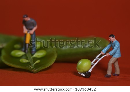 Stock photo: Construction Workers in Conceptual Food Imagery With Snap Peas