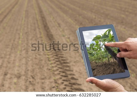 Farmer using digital tablet computer in cultivated soybean crops Stock photo © stevanovicigor