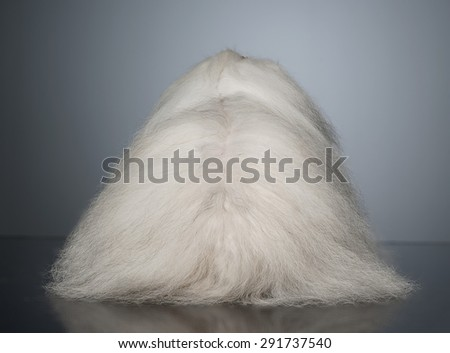 Stock photo: white long hair funny dog turns his back in graduated background