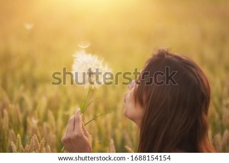 Gyönyörű fiatal nő pitypang búzamező nyár naplemente Stock fotó © artfotodima